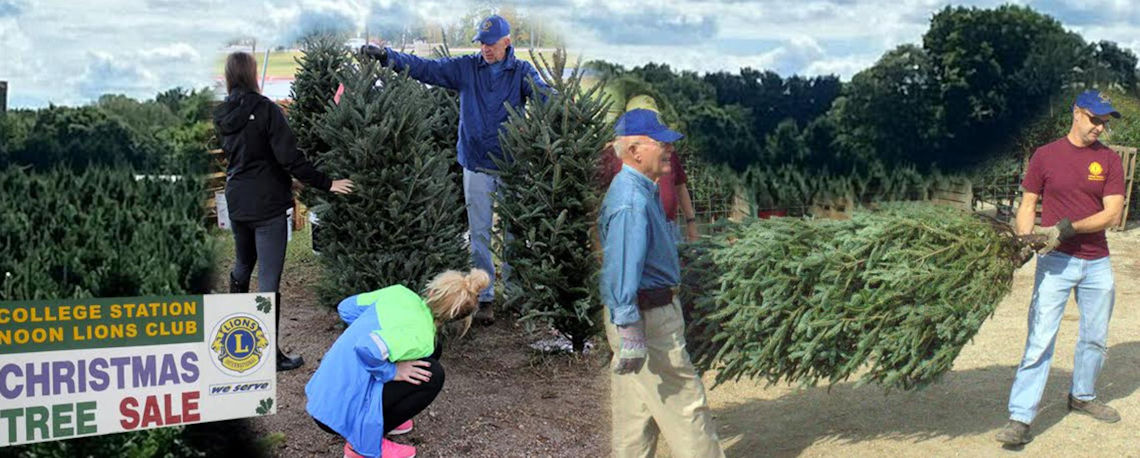 Christmas Trees 2020